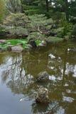 Koi在日本庭院里填装了池塘 库存图片