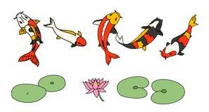 Koi在白色背景设置的鱼传染媒介 库存图片