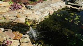Koi池塘 影视素材