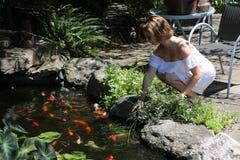Koi池塘 库存图片
