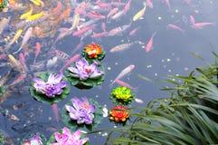 Koi池塘 图库摄影