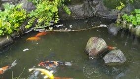 Koi池塘 免版税库存图片