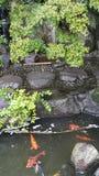 Koi池塘 库存照片