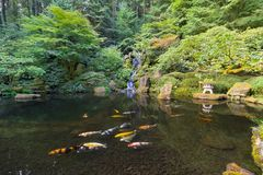 Koi鱼在日本庭院的瀑布池塘 免版税库存照片