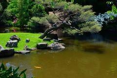Koi鱼在日本池塘 库存图片