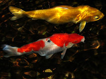 Koi Photographie stock