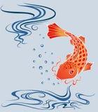 Koi carp. Vector illustration of a koi carp Stock Photography