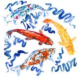 Koi carp collection swimming in pond with blue waves. Hand painted watercolor illustration, top view Royalty Free Stock Photo