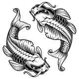 Koi carp monochrome version. Koi carp  illustration, isolated on white background Stock Image