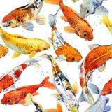 Koi carp seamless pattern. watercolor fish background illustration. Koi carp seamless pattern. watercolor fish illustration Stock Photo