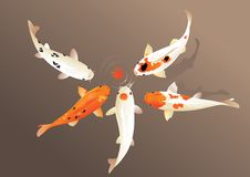 Koi carp. Vector illustration of traditional sacred Japanese Koi carp fish Royalty Free Stock Image