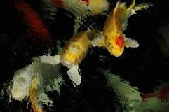 Koi carpguldfisk arkivbilder