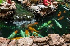 Koi Carps Fish simning i dammet på Wat Borom Raja Kanjanapisek W Arkivfoton