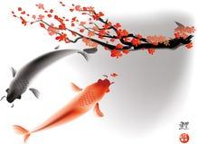 Koi carps and sacura branch Stock Images