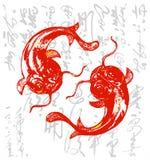 Koi chino/carpa Foto de archivo libre de regalías