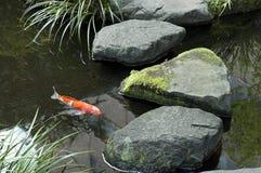Koi dans l'étang japonais de maison de thé Photographie stock