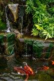 Koi dans le jardin de l'eau Photo stock