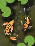 Koi de deux papillons dans l'étang Photographie stock