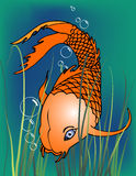 Koi Fische lizenzfreie abbildung
