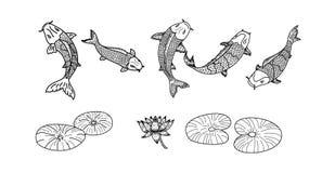 Koi-Fischvektor eingestellt auf weißen Hintergrund Stockbilder