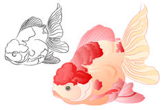 Koi fish. Illustration of red koi fish with outline style Royalty Free Stock Photos