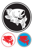 Koi fish. The figure shows the koi carp Stock Photo