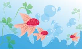 Koi fish and aqua blue wallpaper. Koi fish and blue aqua is wallpaper for good nature Stock Photo