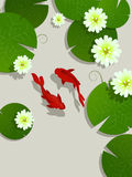 Koi fish card. Koi fish and lotus leaves and flowers background card with room for text Stock Image