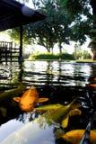KOI FISH. Colorful of life. Koi fish pond in Jogjakarta, Indonesia Stock Photos