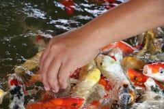 Beautiful fish farming royalty free stock photos
