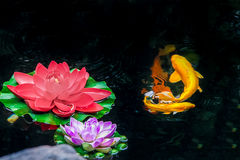 Koi fish and flowers on a pond - Shanghai, China. Koi fish and flowers on a pond royalty free stock photo