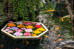 Koi fish and flowers in a pond. Shanghai, China royalty free stock photography