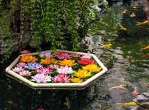 Koi fish and flowers in a pond - Shanghai, China Stock Photos