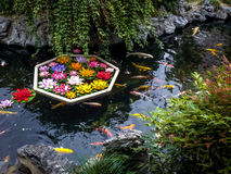 Koi fish and flowers in a pond - Shanghai, China royalty free stock photos