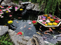Koi fish and flowers in a pond - Shanghai, China. Koi fish and flowers in a pond stock photos