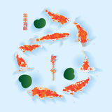 Koi fish free swimming effect Stock Photos