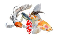 Koi carb isolated on white background .Fish Hand painted Watercolor illustration. Koi fish . Hand drawn sketch and watercolor illustrations. Watercolor painting Stock Photo