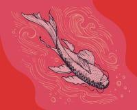 Koi fish Royalty Free Stock Photos