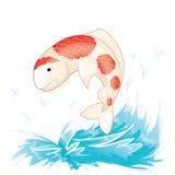 Koi Fish. Isolated on white Royalty Free Stock Photos