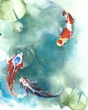 Koi fish Japanese symbol in the pond watercolor painting illustration. Koi fish Japanese symbol in the pond with lilies watercolor painting illustration colorful royalty free stock photos