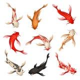 Koi fish set stock illustration