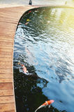 Koi fish pond Royalty Free Stock Photo