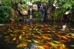Koi fish in pond at the garden Stock Image