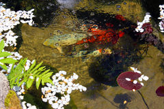 Koi fish pond Royalty Free Stock Photos
