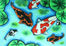 Koi fish swiming in water painting. Background Royalty Free Stock Image