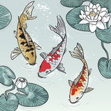 Koi-fish among water-lilys. Three koi-fish among water-lilys Royalty Free Stock Image
