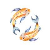 Koi fish. Yin Yang symbol. Watercolor illusration isolated Stock Photos