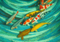 Koi fishes. Beautiful koi fishes swimming in the pond Royalty Free Stock Photos