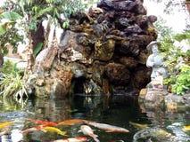 Koi fisk på Wat Pho Arkivfoto