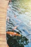 Koi fiskdamm arkivbilder